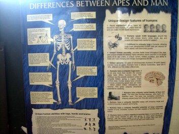 Noah's Ark Zoo farm poster