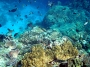 Coral reefs are too old to be young!