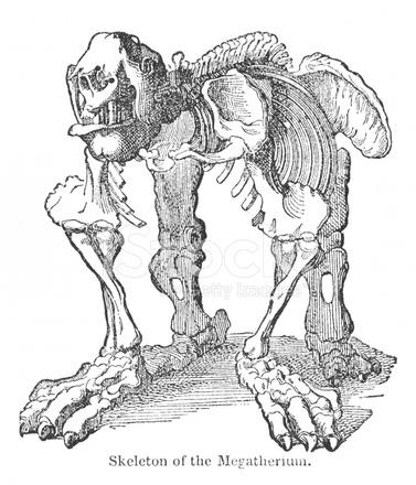 58729698-victorian-engraving-of-megatherium